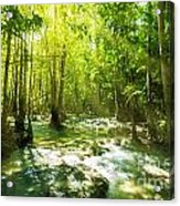 Waterfall In Rainforest Acrylic Print