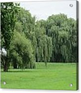 Weeping Willows Acrylic Print