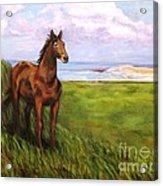 Welsh Breezes Acrylic Print by Ellen Howell