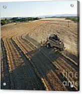 Wheat Harvest In Provence Acrylic Print