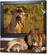While The Lion Sleeps Tonight Acrylic Print