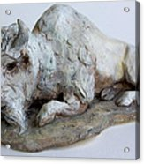 White Buffalo-sculpture Acrylic Print by Derrick Higgins