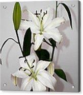White Lily Spray Acrylic Print