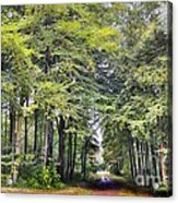 Whitwell Wood Acrylic Print