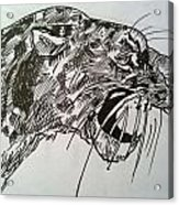 Wild Cheetah Acrylic Print