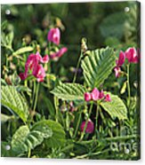 Wild Grass Flower Acrylic Print