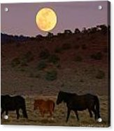 Wild Horse Moon  Acrylic Print by Jeanne  Bencich-Nations