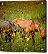 Wild Horses In California Series 2 Acrylic Print