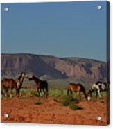 Wild Horses In Monument Valley Acrylic Print