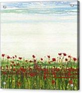 Wild Poppies Corbridge Acrylic Print by Mike   Bell