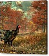 Wild Turkey Acrylic Print by Daniel Eskridge