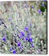 Wildflower Acrylic Print