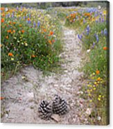 Wildflower Wonderland 11 Acrylic Print