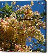 Wilhelmina Tenney Rainbow Shower Tree Acrylic Print