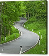 Winding Road In The Woods Acrylic Print