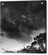 Windy Trees Acrylic Print