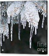 Winter Branches In Ice Acrylic Print