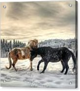 Winter Challenge Acrylic Print