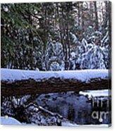 Winter Forest Stream Acrylic Print