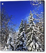 Winter Forest Under Snow Acrylic Print