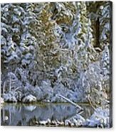 Winter Scene Acrylic Print by Pat Now