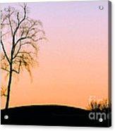 Winter Sunset Tree Acrylic Print