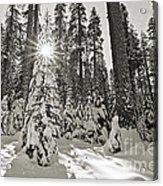 Winter Wonderland - Badger Pass In Yosemite National Park Acrylic Print