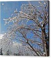 Winter's Day Acrylic Print