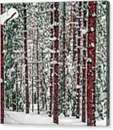 Winters Forest Acrylic Print