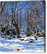 Winter's Tale  Acrylic Print