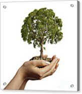Womans Hands Holding Soil With A Tree Acrylic Print