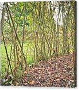 Woodland Path Acrylic Print