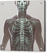 X-ray Skeleton Acrylic Print