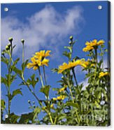 Yellow Buttons Acrylic Print