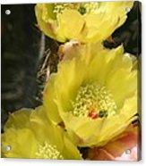 Yellow Cactus Acrylic Print