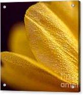 Yellow Flower Macro Acrylic Print