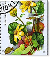 Yellow Lesser Celandine Ranunculus Ficaria Acrylic Print