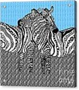 Zebra Love 19 Acrylic Print
