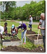 Community Gardening Acrylic Print