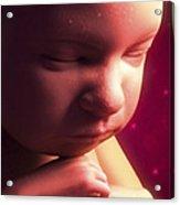 Developing Fetus Acrylic Print