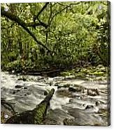 Jungle Stream Acrylic Print