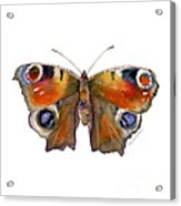 10 Peacock Butterfly Acrylic Print