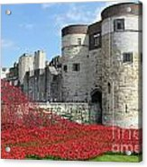 Remembrance Poppies At The Tower Of London Acrylic Print