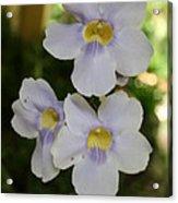 Purple Yellow Tropical Flower Acrylic Print