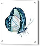 101 Perched Danis Danis Butterfly Acrylic Print