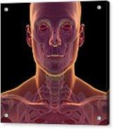Bones Of The Head And Neck Acrylic Print