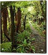 Forest Trail Acrylic Print