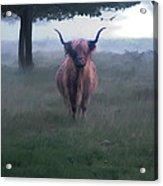 11. Highland Acrylic Print