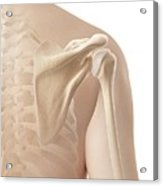 Human Shoulder Acrylic Print