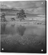 Infrared Picture Of The Nature Area Dwingelderveld In Netherlands Acrylic Print by Ronald Jansen